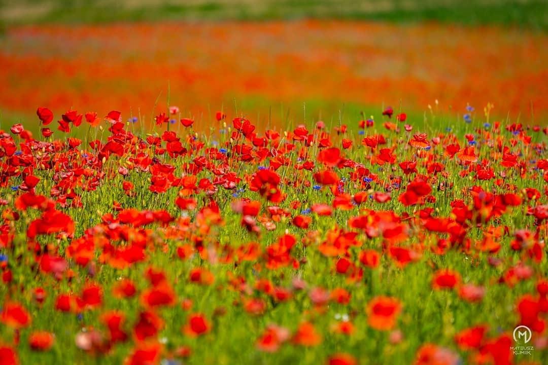 Polne kwiaty opanowały okolice Mikołajek 😍🌸 💐🌾 ______ #mikolajki #mikołajki #miastomikolajki #beautifulpoland #mazury #p